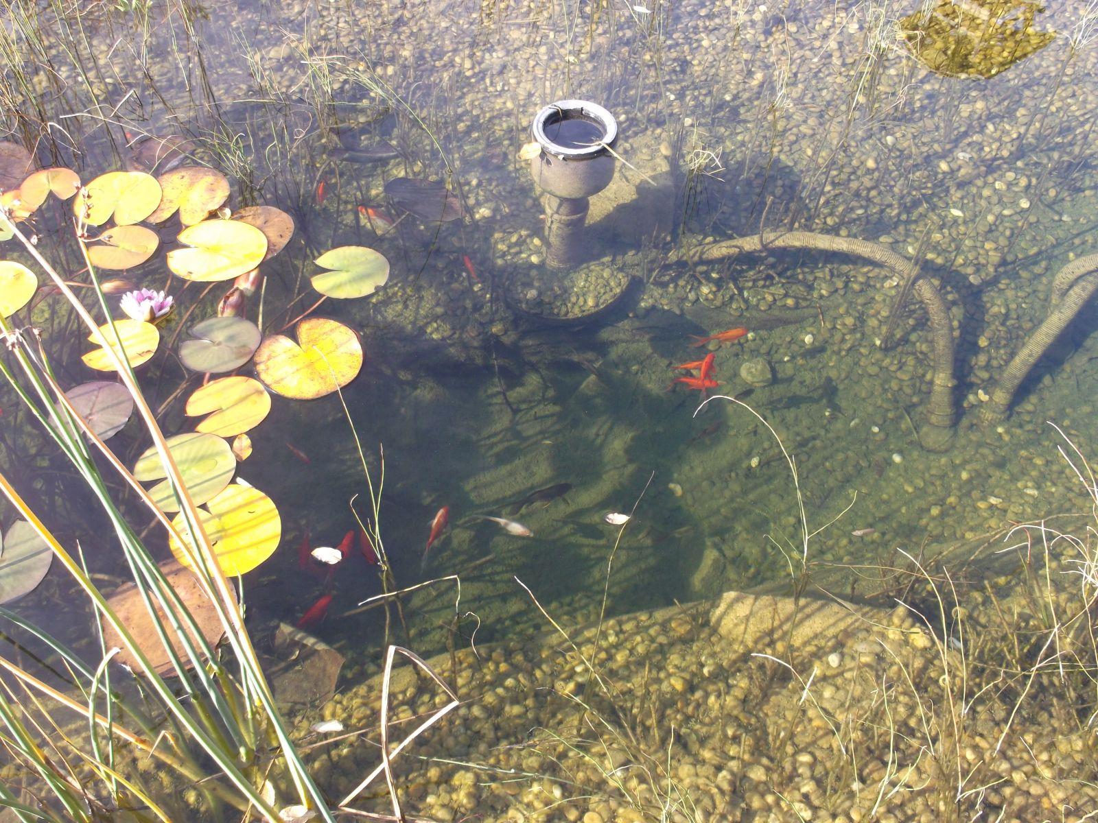 scd pond referencia